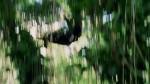 Остаться в живых (5 Сезон) - 5 Серия